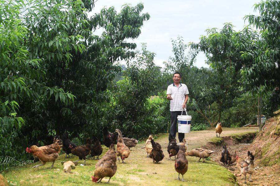 重慶萬州:産業助脫貧