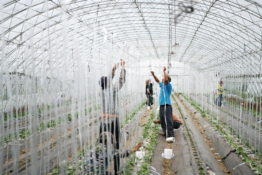 黑龍江肇東:農業生態觀光園助力脫貧增收