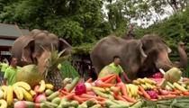 雲南:世界大象日 大象暢享水果長桌宴