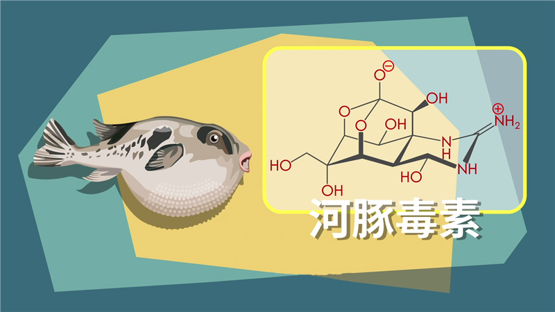 食用不當易中毒 含河豚毒素的海産品請當心