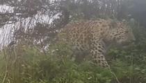 陜西鷹嘴石自然保護區首次拍攝到金錢豹影像