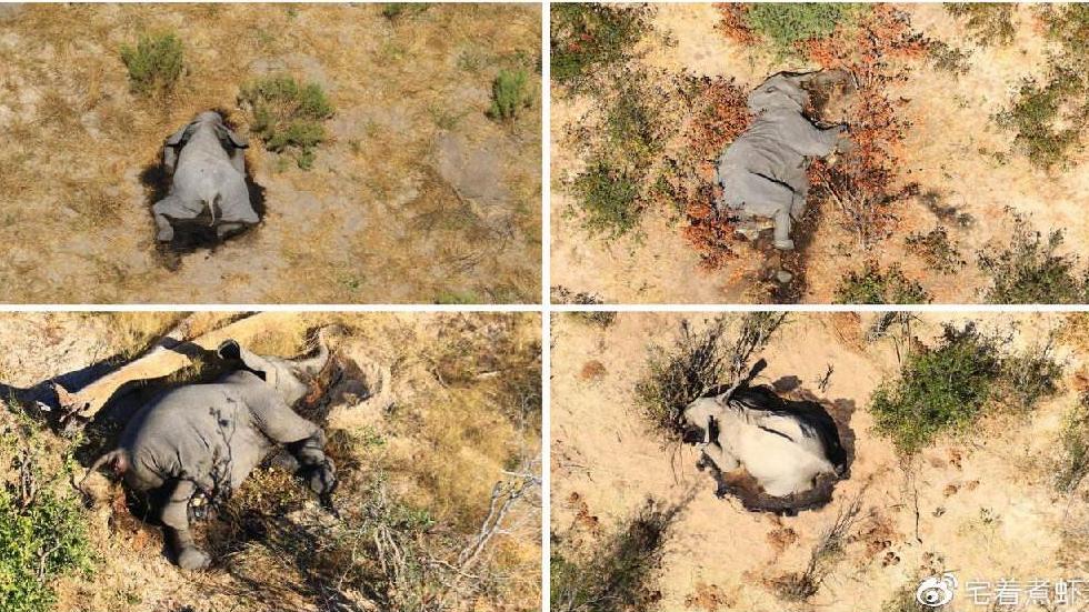 博茨瓦納:數百頭大象接連死亡 死因成謎